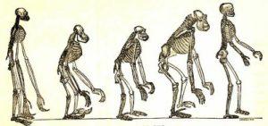 Image of skeletons