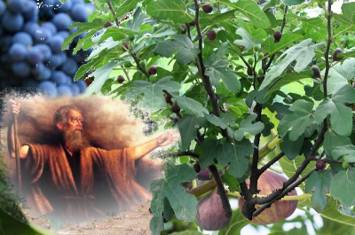 Micah with vine & figs